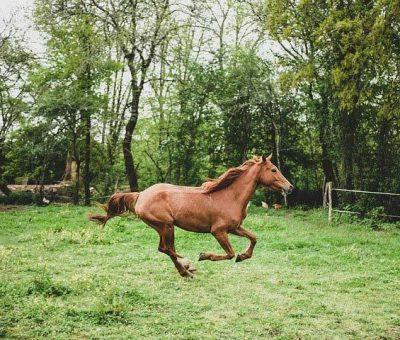 paddock cheval